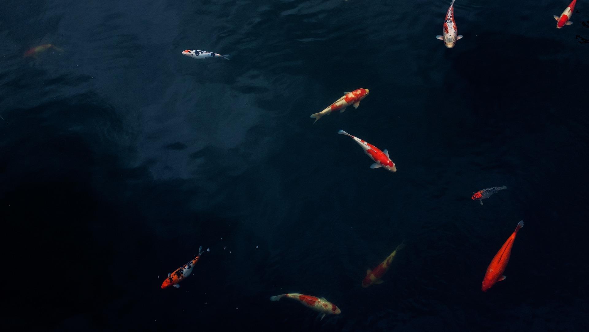 Olika tekniker inom fiske