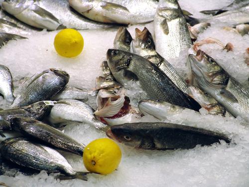 Olika typer av fiske i Sverige