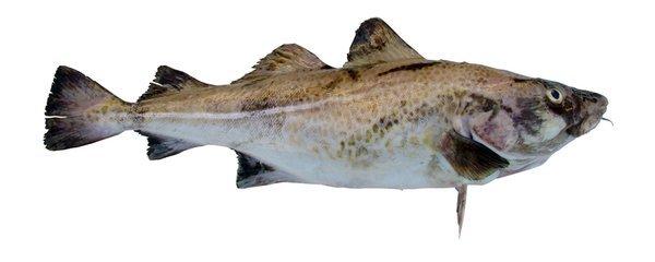 Fiskepolitik